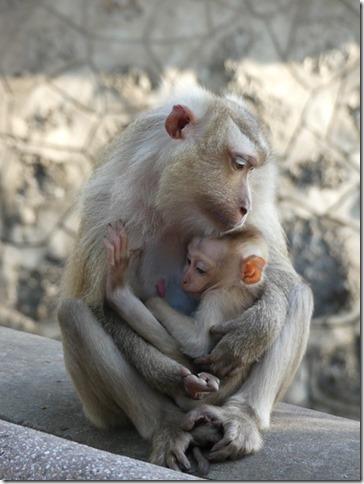 Kompong Cham - Temples aux singes (40)