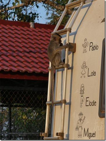 Kompong Cham - Temples aux singes (5)