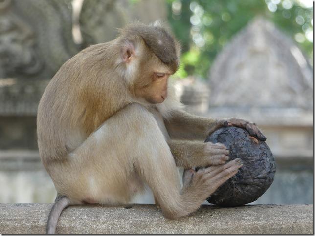 Kompong Cham - Temples aux singes (65)