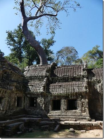 Temples d'Angkor - Ta Prohm (16)