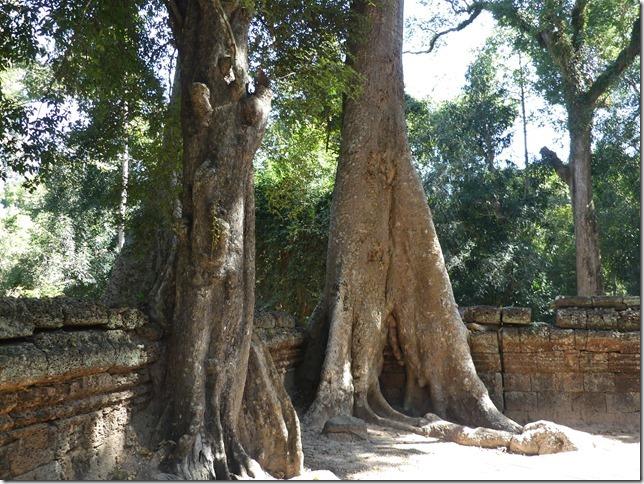 Temples d'Angkor - Ta Prohm (22)
