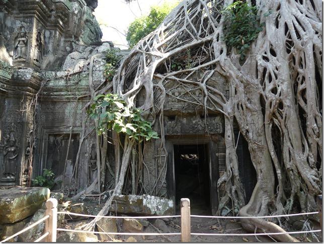 Temples d'Angkor - Ta Prohm (57)