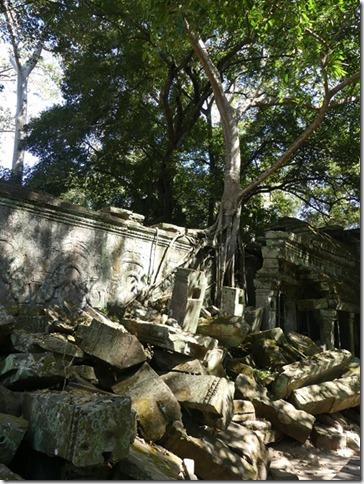 Temples d'Angkor - Ta Prohm (5)