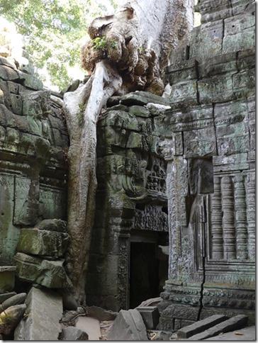 Temples d'Angkor - Ta Prohm (66)