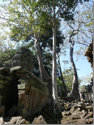 Temples d'Angkor - Ta Prohm (70)