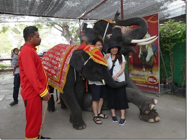 Ayutthayah - éléphants (46)