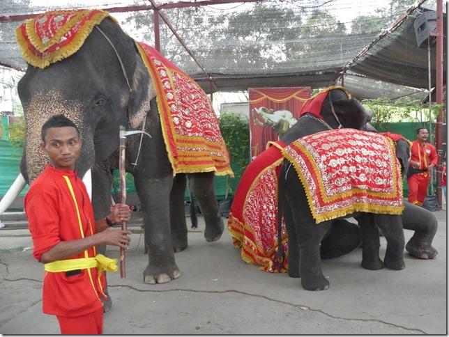 Ayutthayah - éléphants (48)