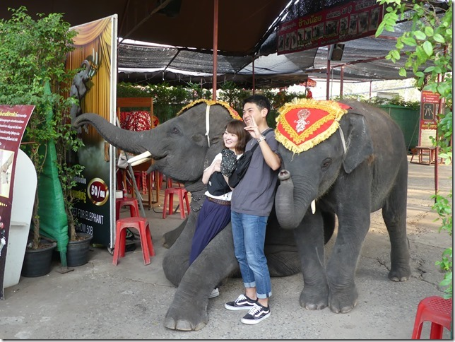 Ayutthayah - éléphants (4)
