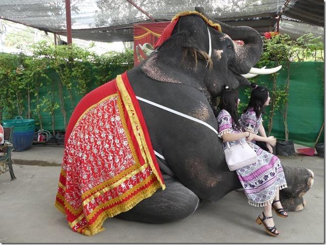 Ayutthayah - éléphants (50)
