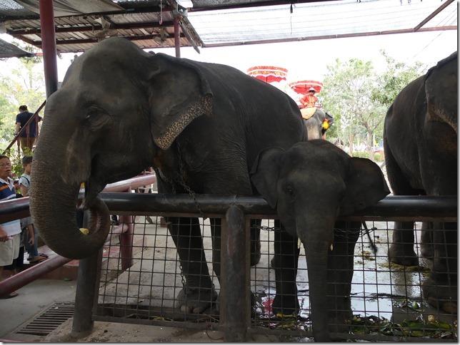 Ayutthayah - éléphants (52)