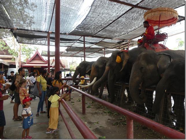 Ayutthayah - éléphants (56)