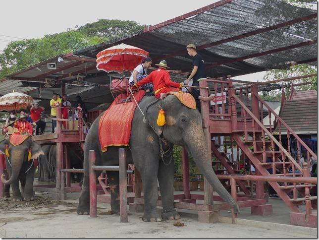 Ayutthayah - éléphants (63)