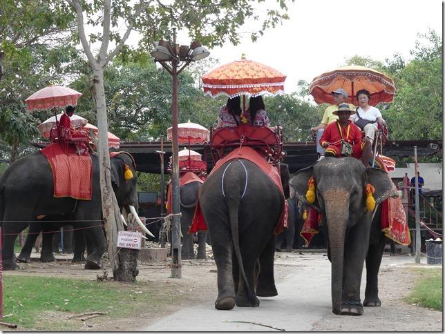 Ayutthayah - éléphants (66)