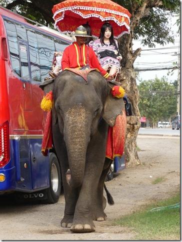 Ayutthayah - éléphants (68)
