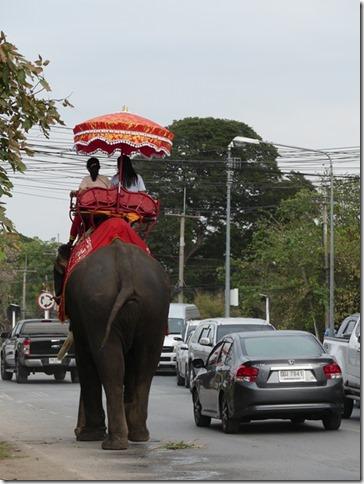 Ayutthayah - éléphants (74)