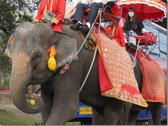 Ayutthayah - éléphants (76)