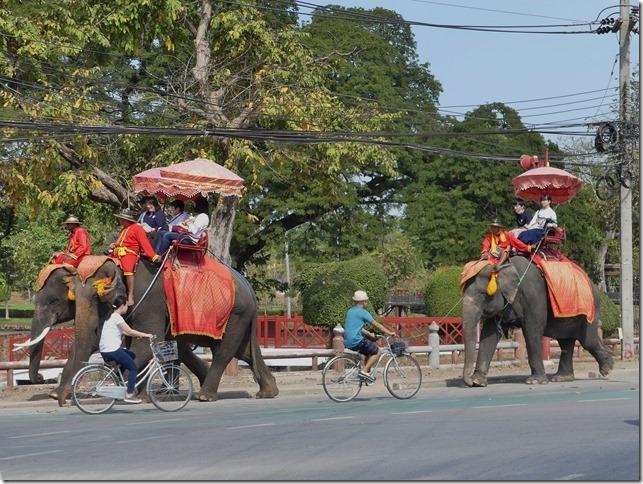 Ayutthayah - éléphants (83)