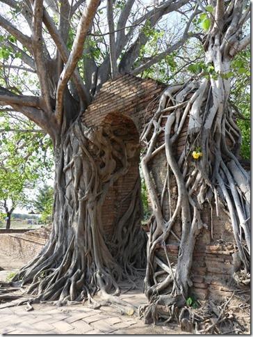Ayutthayah - temples (14)