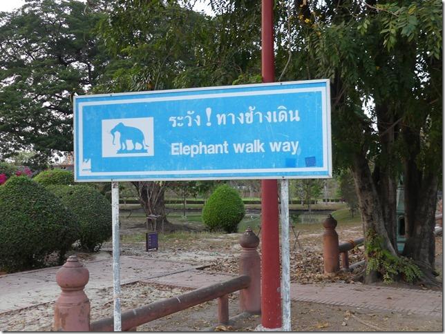 Ayyuthaya - Eléphants