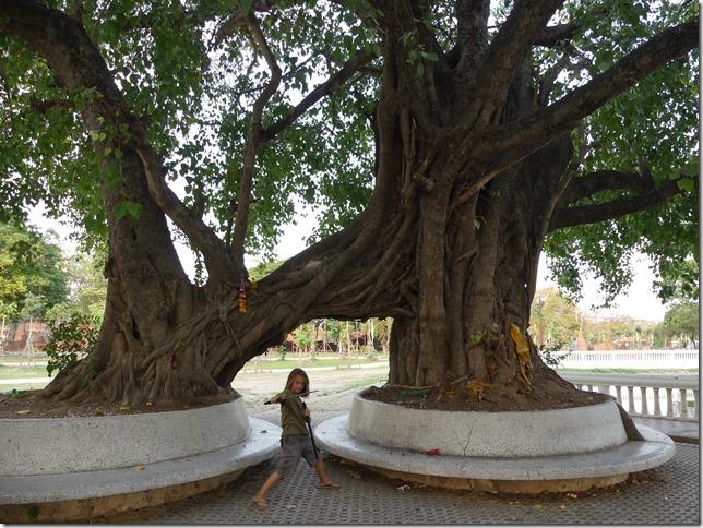 Ayyuthaya - Temples (1)
