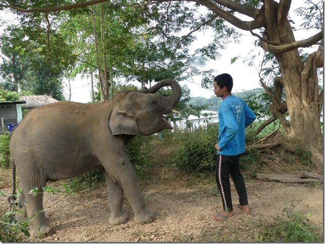 Baan Mama - Chiang Raï et Cho (12)