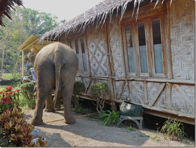 Baan Mama - Le camp (32)