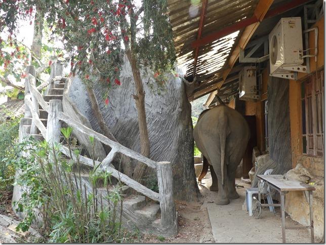 Baan Mama - Le camp (36)