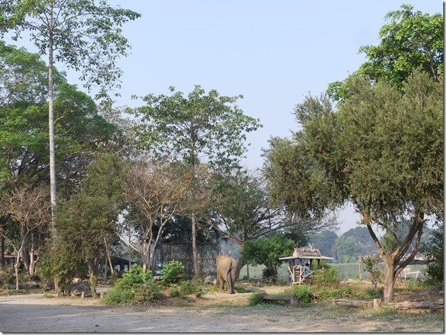 Baan Mama - Le camp (6)