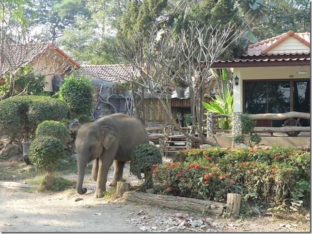 Baan Mama - Le camp (7)