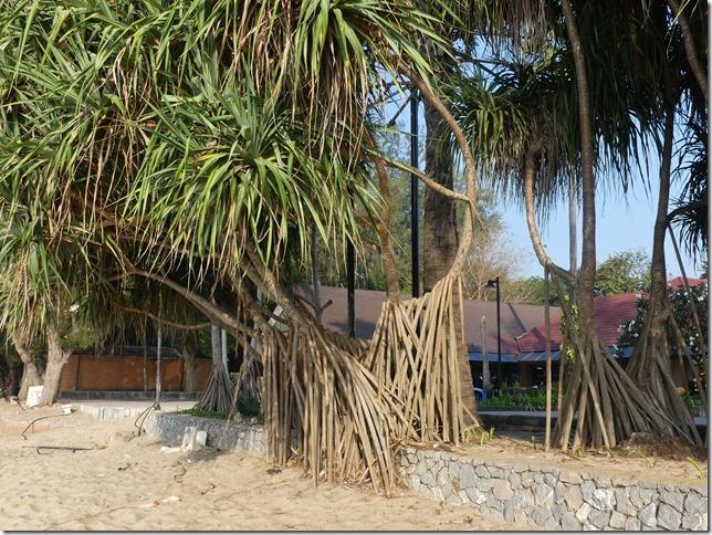 Bivouac plage 3 tree beach (22)
