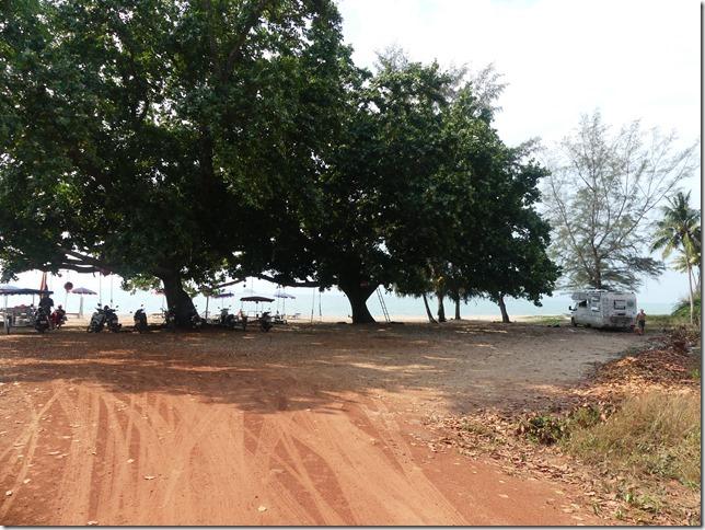 Bivouac plage 3 tree beach (4)