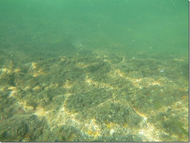 Bivouac plage Noël - sous l'eau (3)