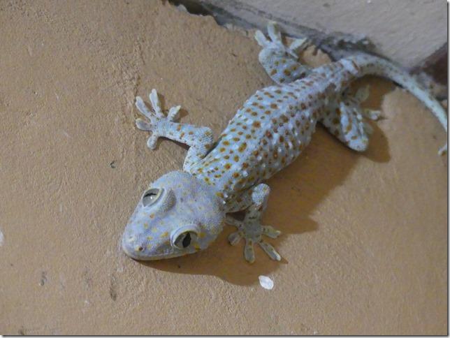 Divers - gecko (2)