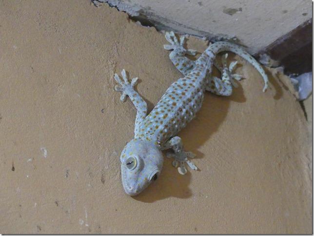 Divers - gecko (1)