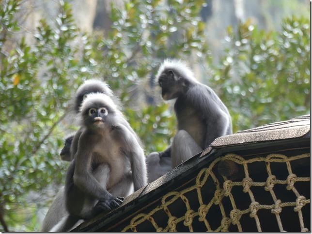 Excursion à Railay (59)