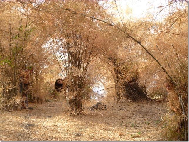 Forest park - Khao Nang Phanthurat (14)