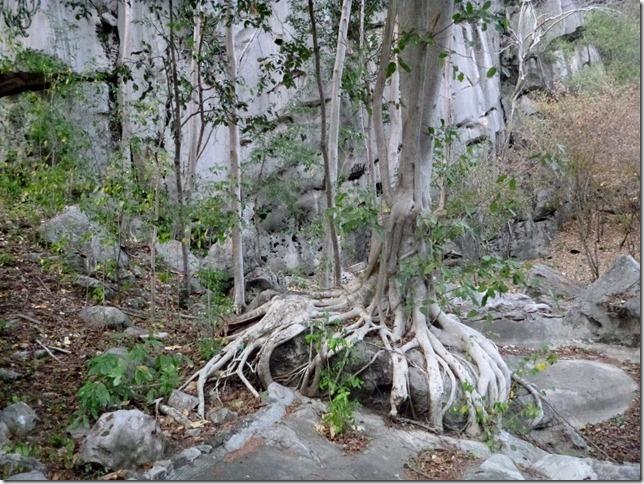 Forest park - Khao Nang Phanthurat (40)