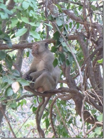Forest park - Khao Nang Phanthurat (42)