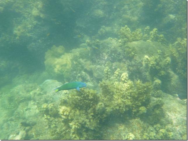 Koh Lanta sous l'eau (12)