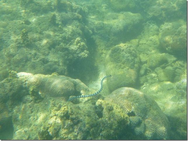 Koh Lanta sous l'eau (18)