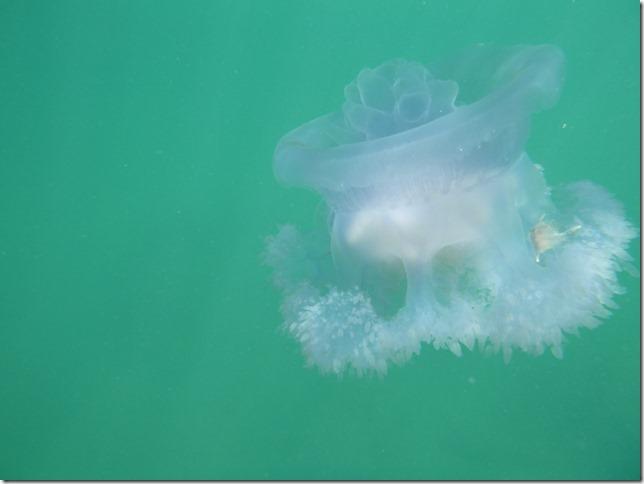 Koh Lanta sous l'eau (1)