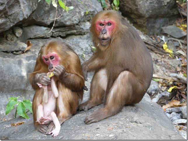 Phang Nga - grotte aux singes (29)
