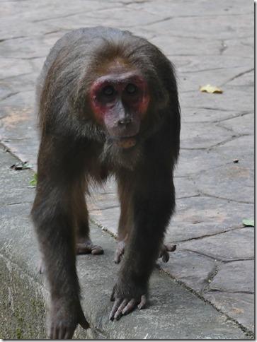 Phang Nga - grotte aux singes (3)