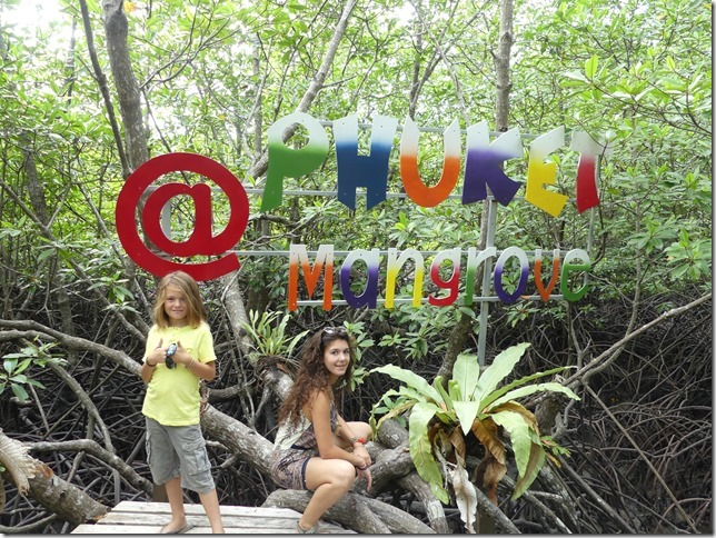 Phuket - mangrove (1)