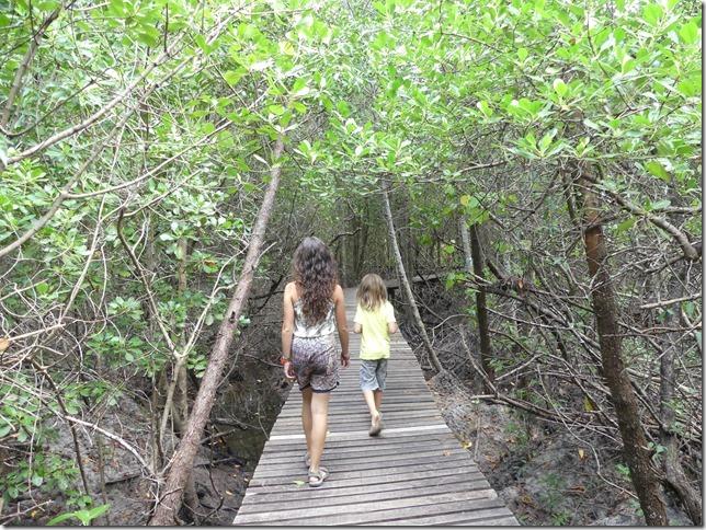 Phuket - mangrove (4)