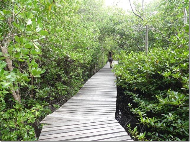 Phuket - mangrove (8)