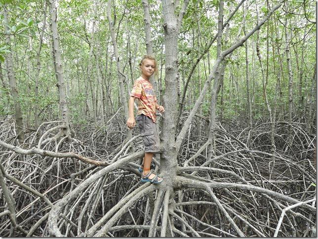 Pran Buri forest park (14)