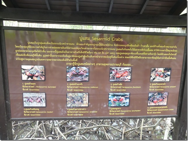 Pran Buri forest park (16)