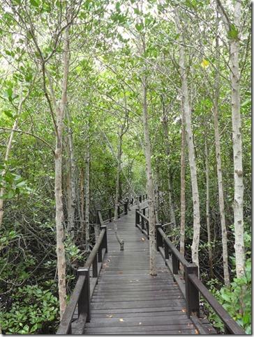 Pran Buri forest park (26)