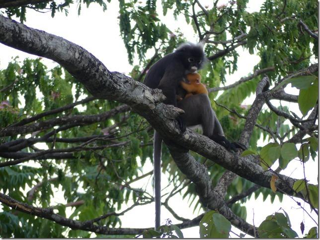Penang National Park (90)